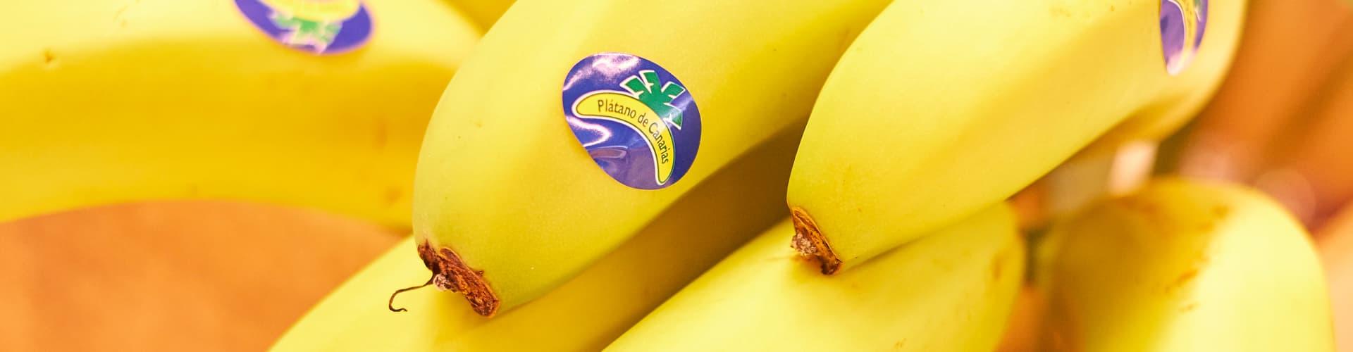 Cabecera Martimar Plátano de Canarias