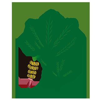Plátano de Canarias Llanos de Sardina